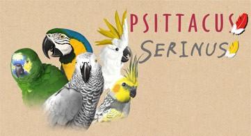 Psittacus